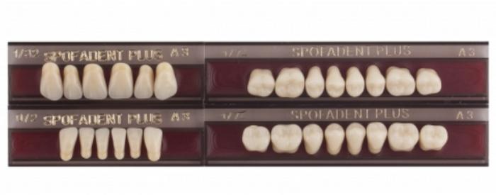 проживания спофадент зубы каталог с картинками таком супе можно